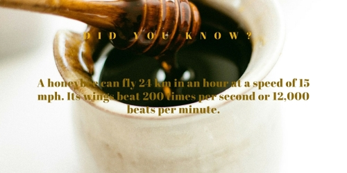 Did YOU KNOW 2-