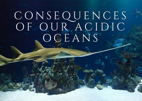 Consequences of our Acidic Oceans