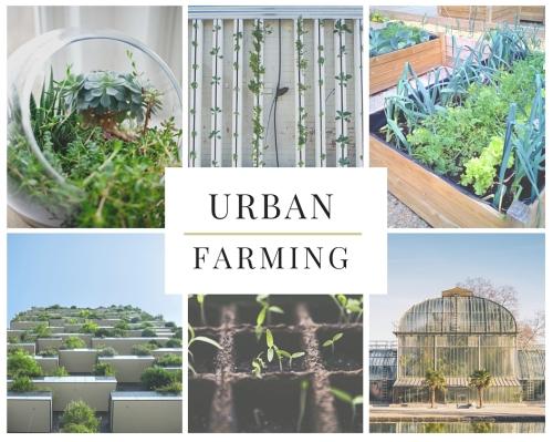 Urban Farming 2